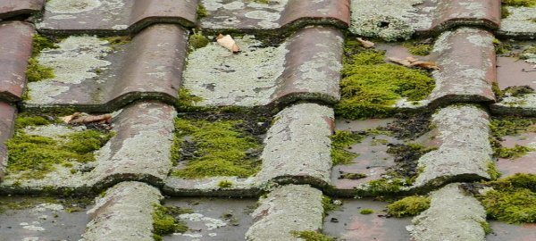 Save the house from erosion; get the roof drains cleaned