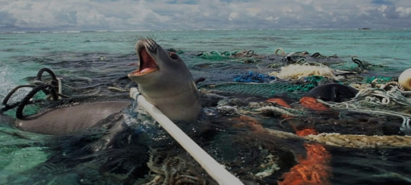 Improper garbage disposal and its consequences for animals and marine life