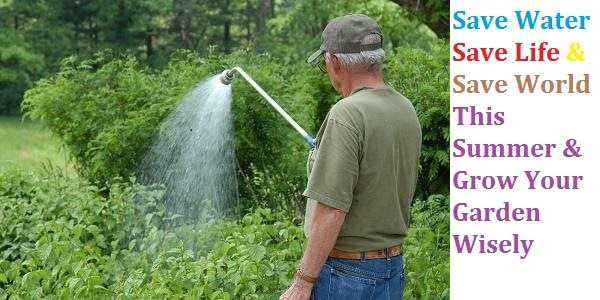 It's Summer, Save Water While Gardening
